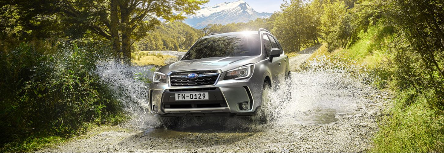 Subaru Forester forest